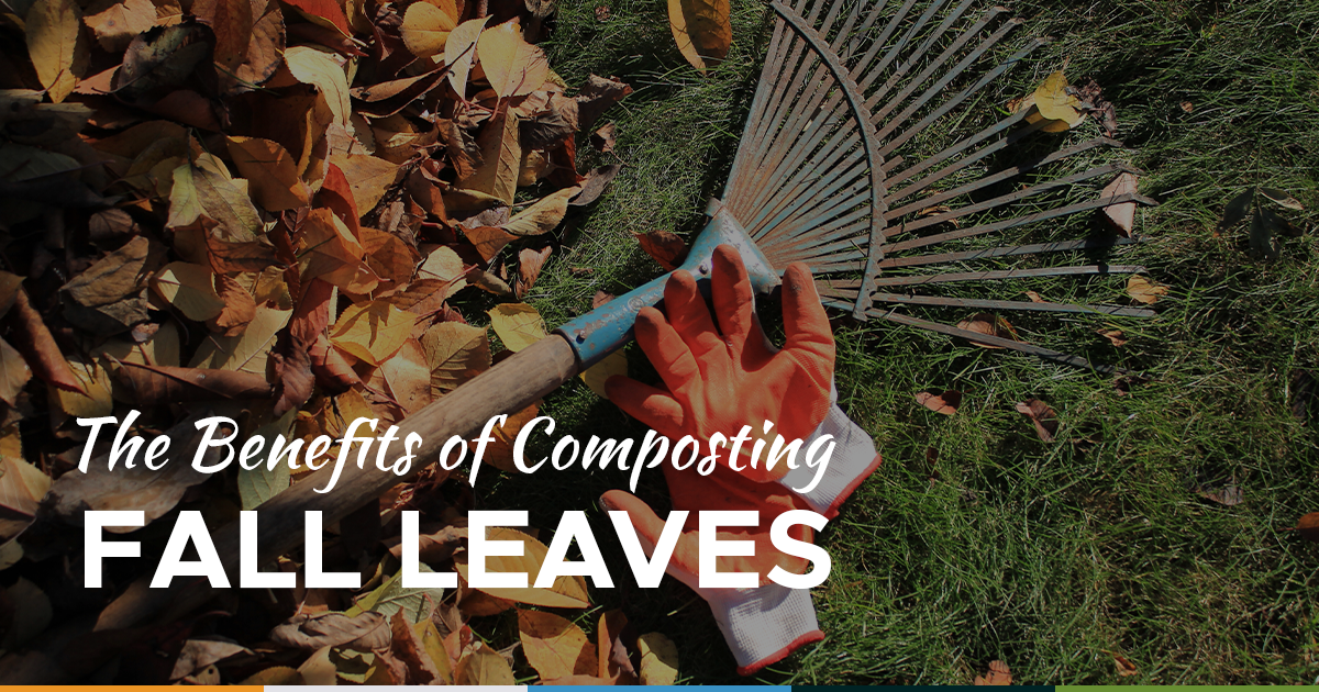 compost fall leaves